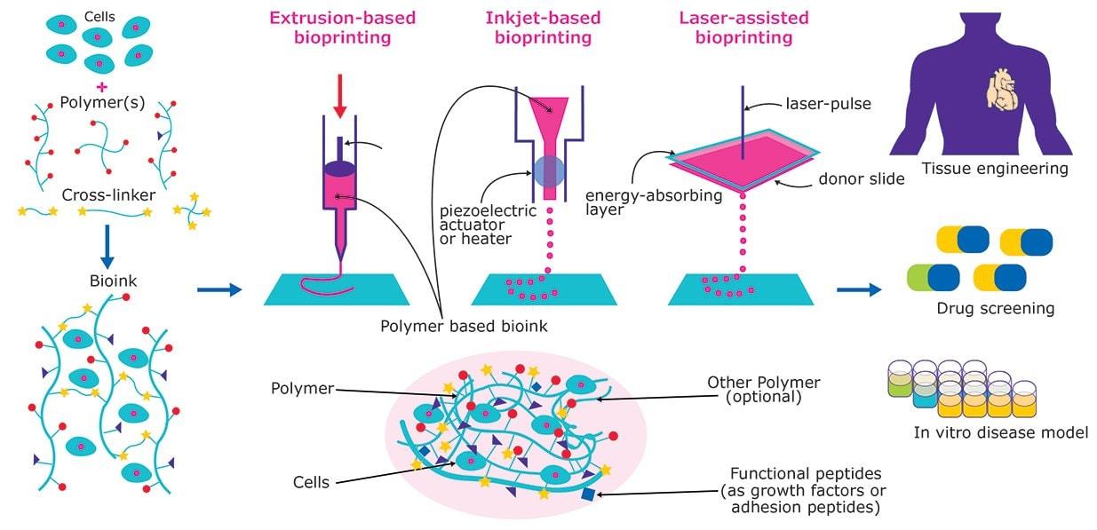 3D Bioprinting: Bioink Selection Guide | Sigma-Aldrich