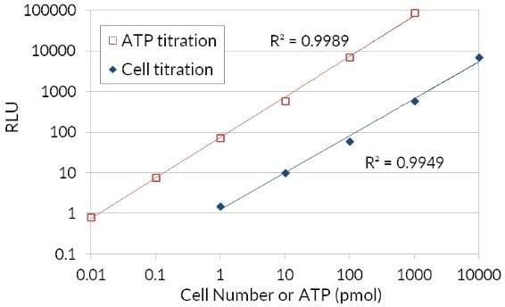 mtt assay calculation