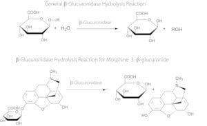 β-Glucuronidase from Helix pomatia
