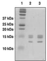 Core Histones human