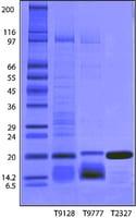 Trypsin Inhibitor from Glycine max (soybean) BioUltra ...