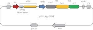 CRISPR-Lenti Human HPRT1 Positive Control DNA