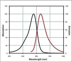Anti-Rabbit IgG (H+L), CF™ 488A antibody produced in chicken