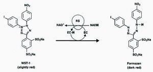 Cell Proliferation Kit I (MTT) | Sigma-Aldrich