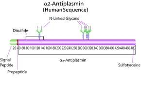 α2-Antiplasmin from human plasma