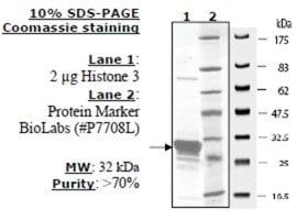 Histone H3 (2-58) human