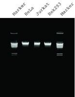 qiagen gel purification kit pdf