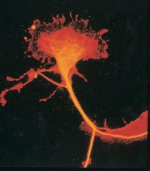 Anti-TUC-4 Protein Antibody | Sigma-Aldrich