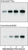 PerfectHyb™ Plus Hybridization Buffer