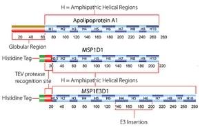 Membrane Scaffold Protein 1E3D1   Krackeler Scientific, Inc