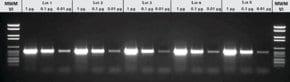 PCR Master
