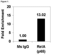 ChIPAb+ NFκB p65 (RelA) - ChIP Validated Antibody and Primer