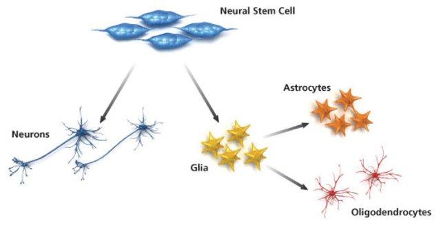 term paper on stem cells