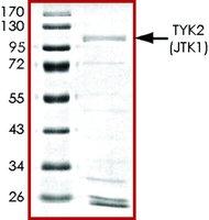 TYK2 (JTK1), active, GST tagged human