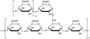 Amylopectin from potato starch