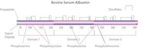 Bovine Serum Albumin solution