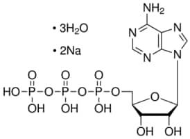 25 Grams Adenosine-5-triphosphate, disodium salt trihydrate ATP