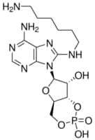 8-(6-Aminohexyl)aminoadenosine 3′:5′-cyclic monophosphate