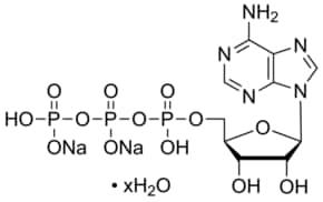 Adenosine 5′-triphosphate disodium salt hydrate