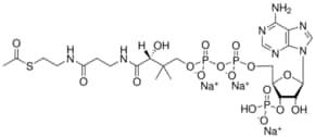 02:0 Coenzyme A,acetoyl Coenzyme A (sodium salt), powder