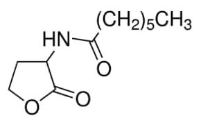 N-Heptanoyl-DL-homoserine lactone