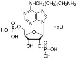 N6-(6-Aminohexyl)adenosine 2′,5′-diphosphate lithium salt