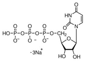 Uridine 5′-triphosphate trisodium salt hydrate